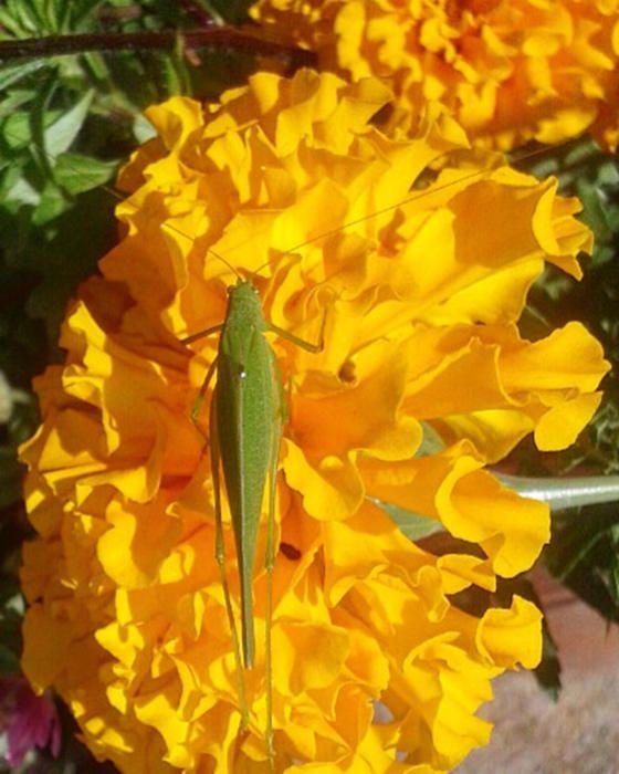 Aquest celífer prenent el sol de la tardó i descansant sobre una bonica flor.