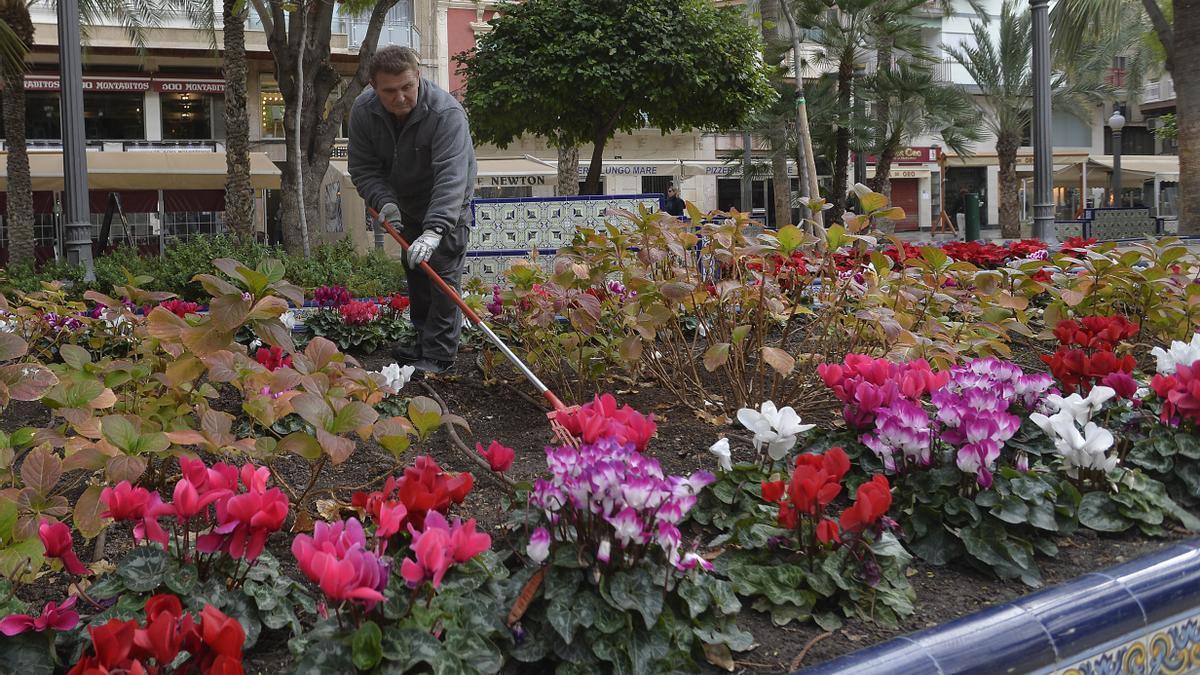 Garden maintenance in Elche.