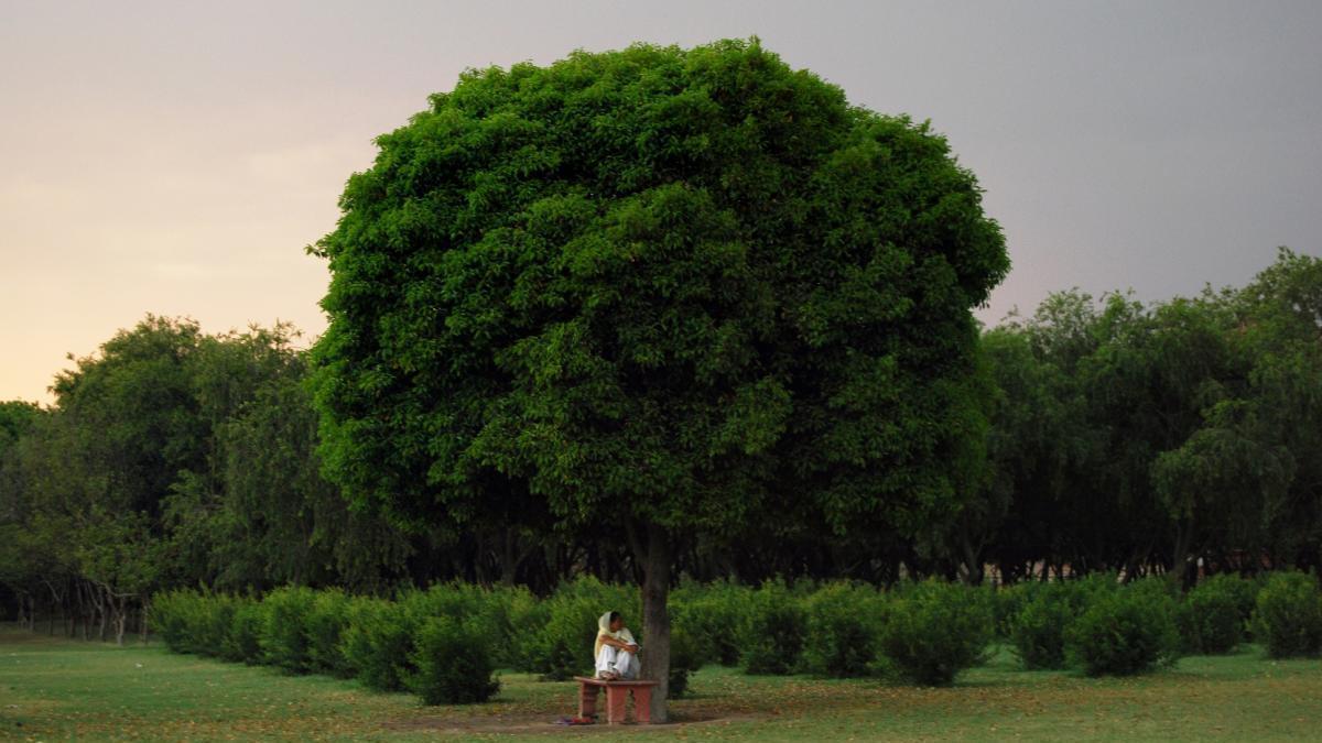 El jardín de las viudas en Agra.