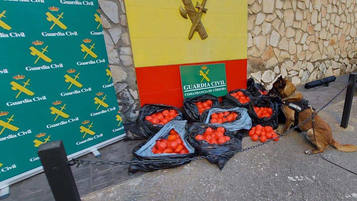 Hachís intervenido en Lucena por la Guardia Civil.
