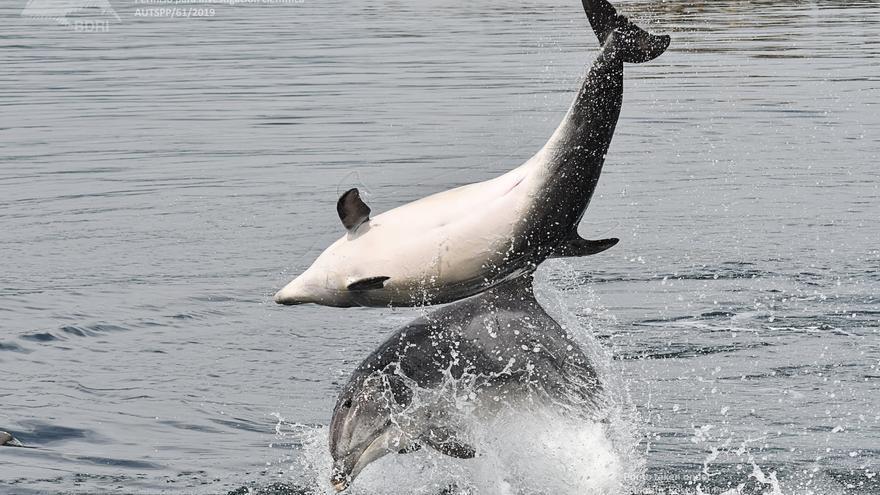 El BDRI prepara cursos online para divulgar el estudio de los cetáceos