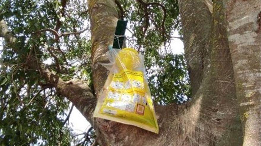 Avinyonet distribueix trampes de prevenció contra la vespa asiàtica
