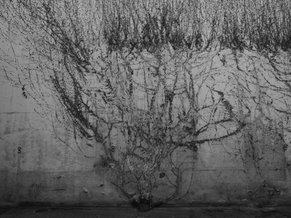 Matías Costa, s/t (de la serie Cuaderno de Campo), 36×50 Negativo en blanco y negro. Copia en papel de gelatina de plata por contacto PRECIO DE SALIDA: 500 EUROS