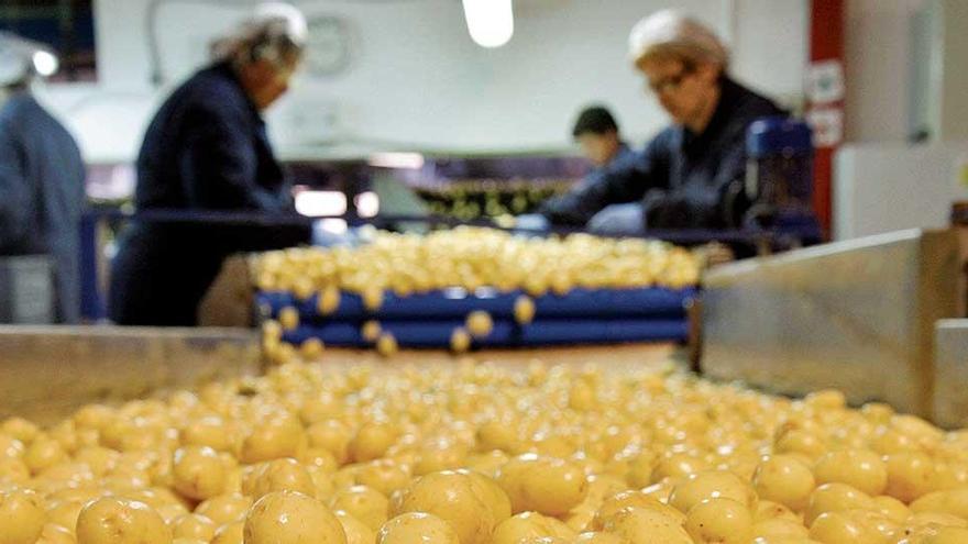 Der Brexit erschwert Mallorcas Kartoffel-Export