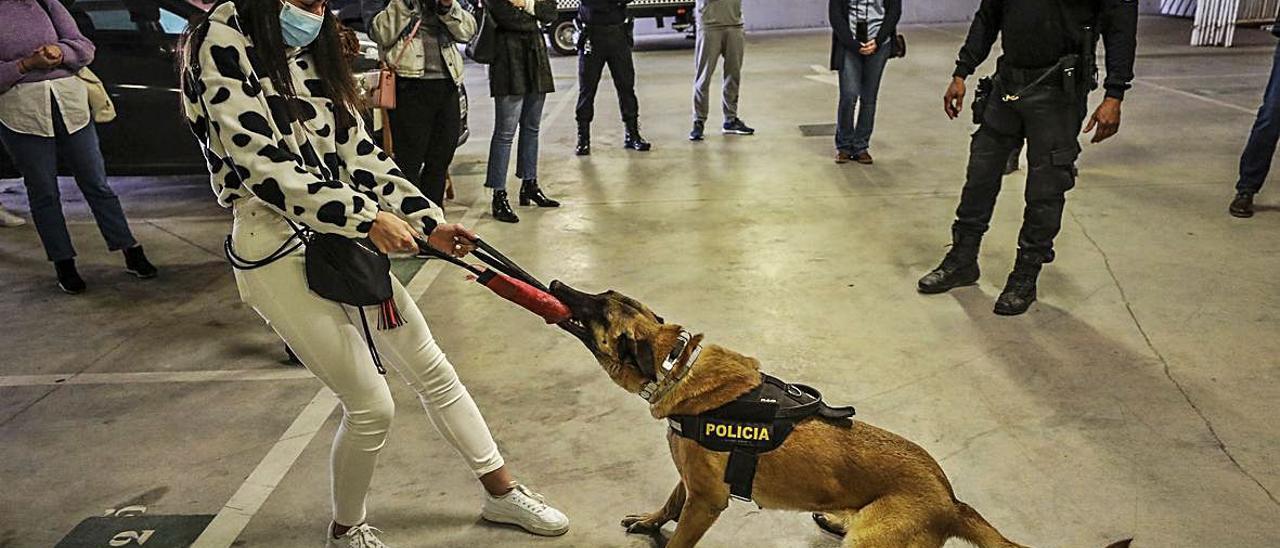 Dos instantes de una de las más de cincuenta exhibiciones que realiza al cabo del año la Unidad Canina de la Policía Local con jóvenes estudiantes de instituto. | ANTONIO AMORÓS