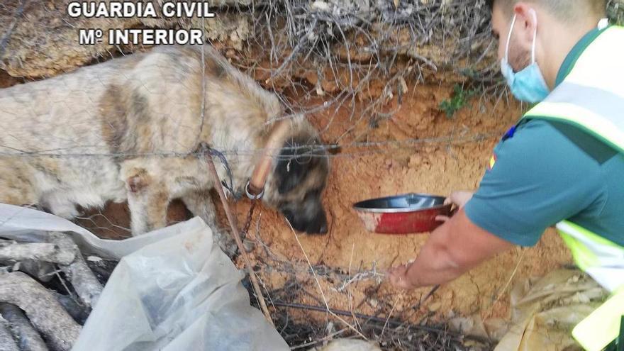 La Guardia Civil rescata a un perro que había quedado atrapado tras caer de dos metros en Cañamero