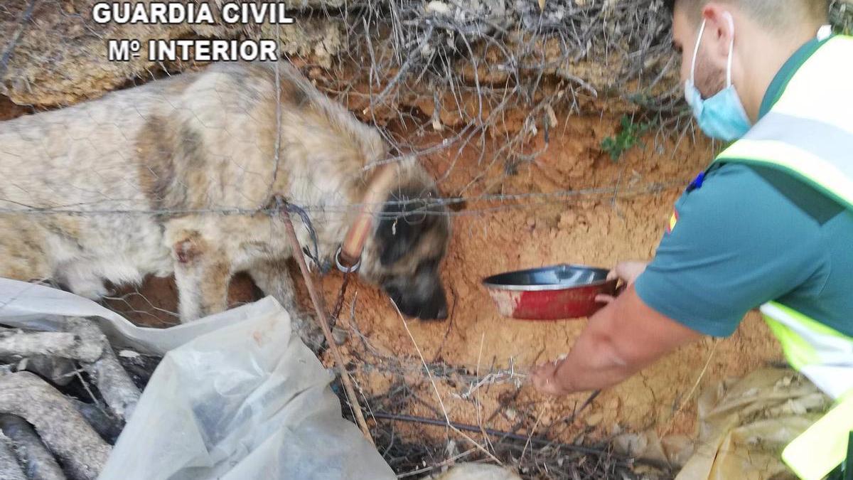 Perro rescatado en Cañamero