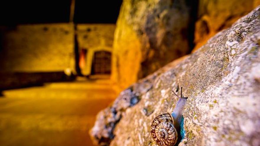 Mallorca-Schnecken bevölkern die historische Stadtmauer von Tarragona