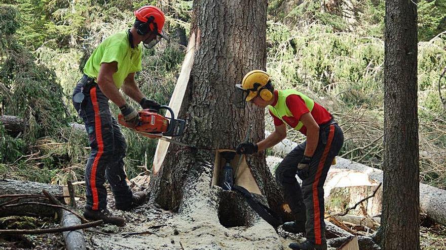 Un alt nombre d'accidents forestals  són causats per manca de formació