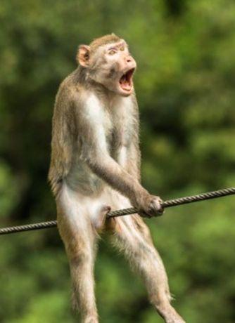 fotos-divertidas-animales-111111111111111.jpg