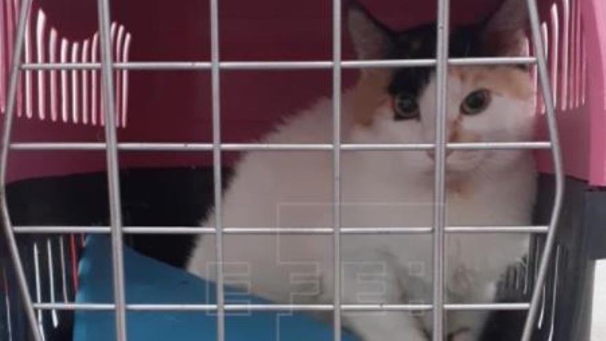 Una gata embarazada viajaba en la patera de la familia con cuatro niñas que llegó a Calp