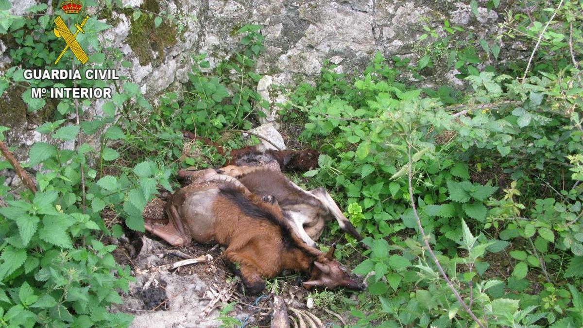Alguno de los animales muertos.