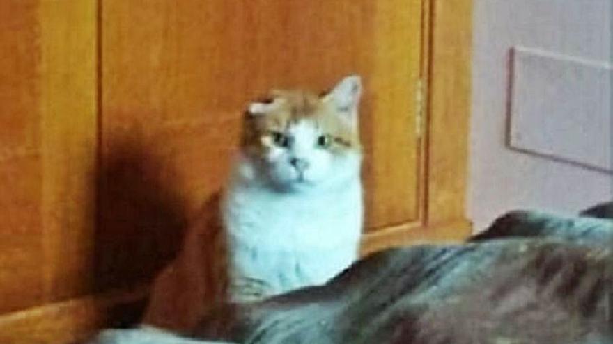Buscan a 'Lucky', un gato perdido en la zona de Beiramar