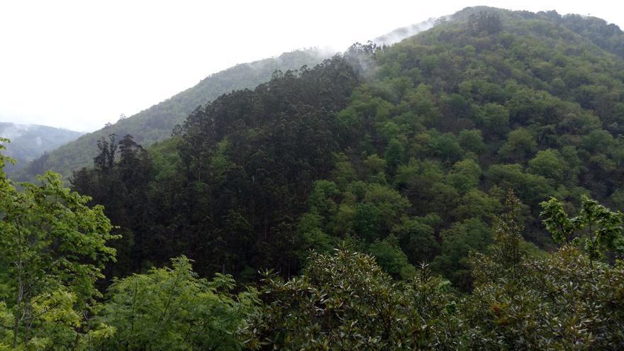 """Denuncian que la moratoria al eucalipto en Galicia es """"un burdo engaño"""""""