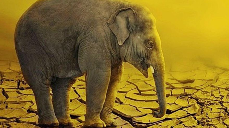 ¿El 5G está matando a los animales?