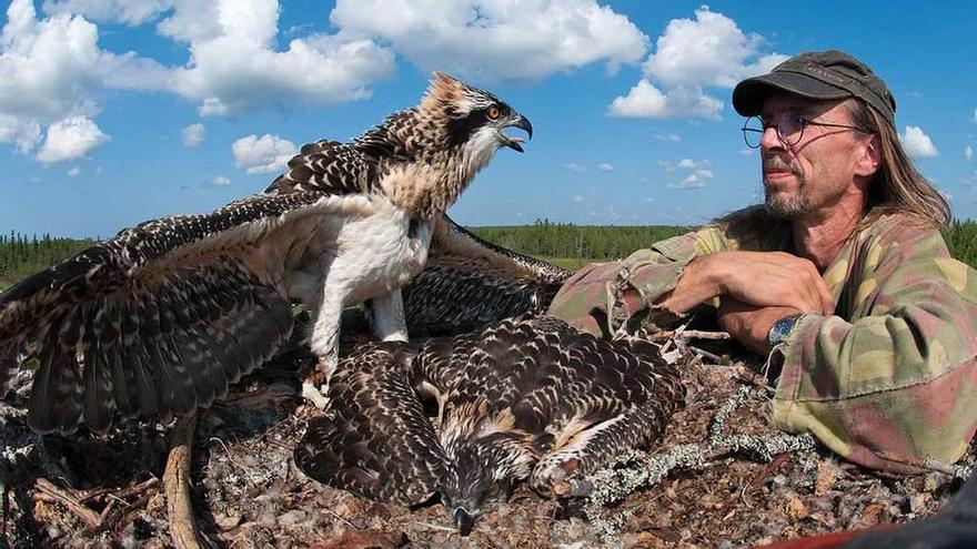 Un águila pescadora con DNI en el Eo