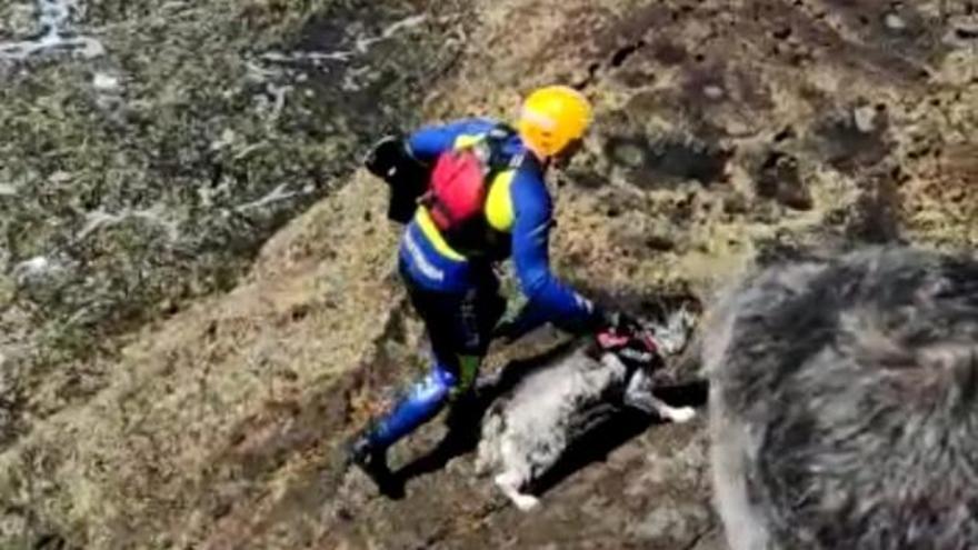Salvan la vida a un perro en Gáldar