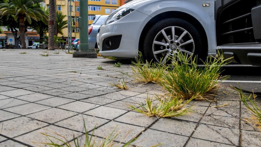 Malas hierbas en la Plaza de la Feria