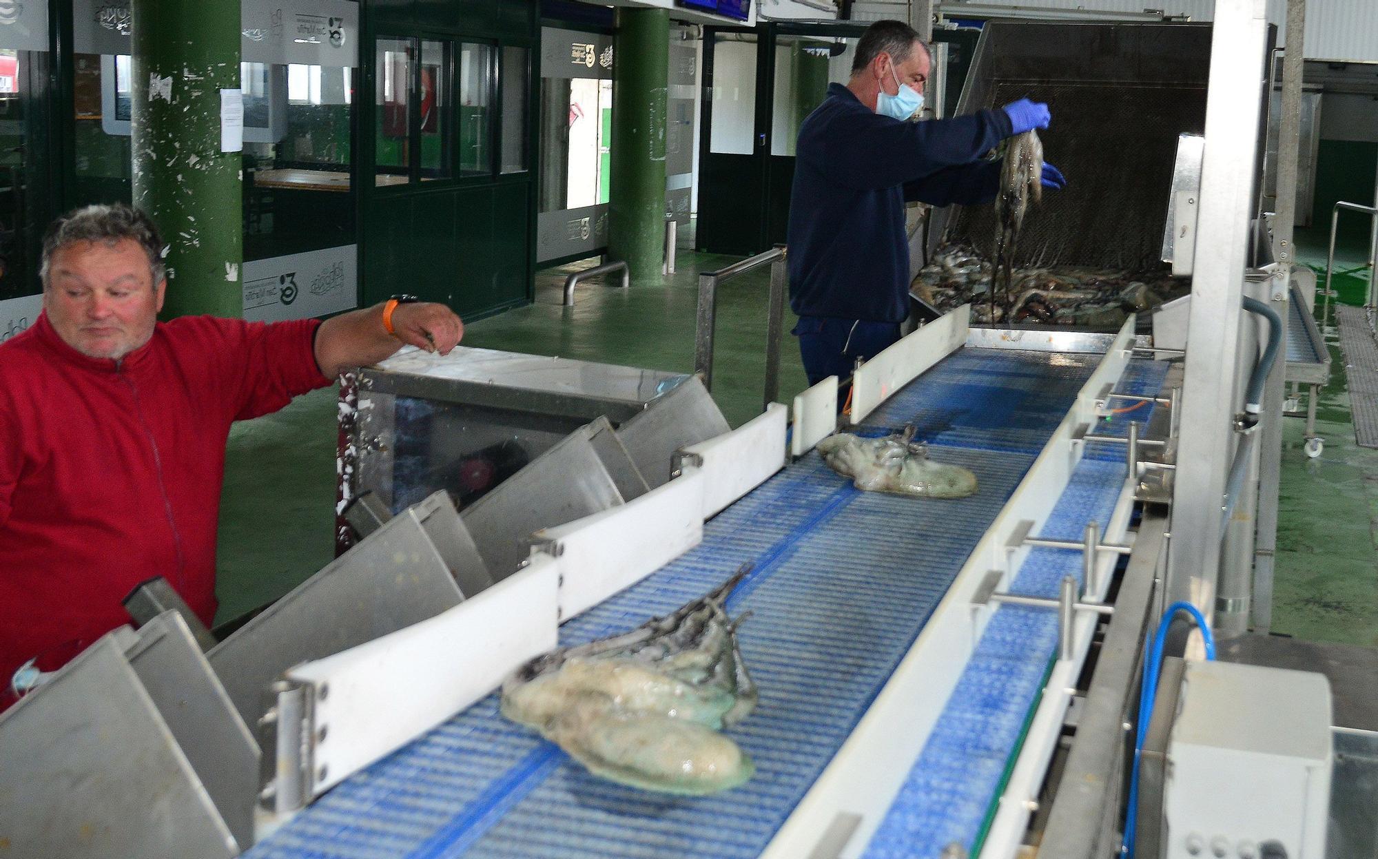 El pulpo gallego se despide de las lonjas hasta julio