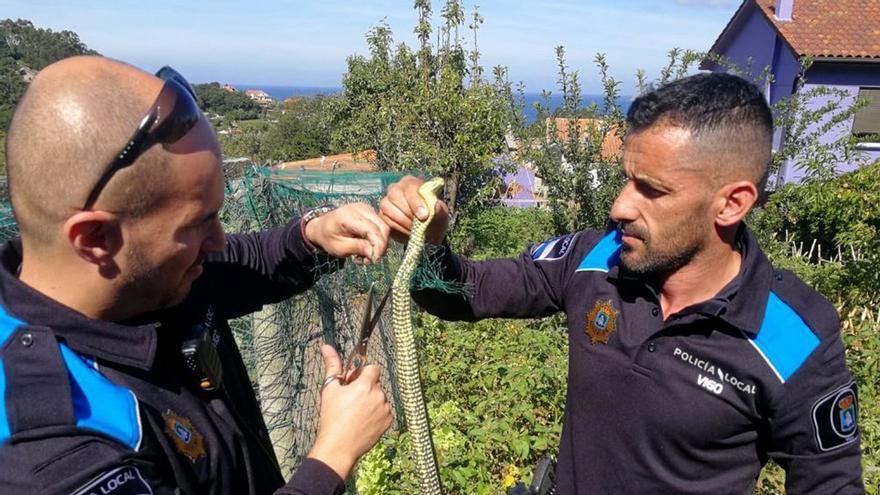 Las serpientes comienzan a salir de su letargo en Vigo