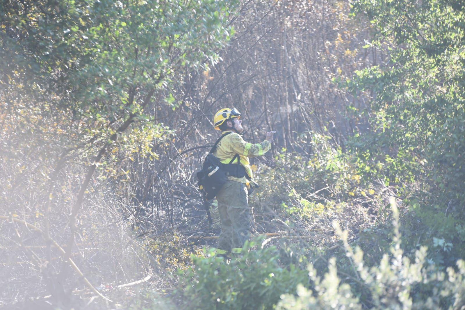 Incendio forestal en la barriada de Trassierra