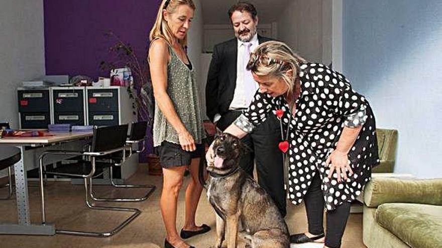Terapia con perros para las mujeres maltratadas de Zamora