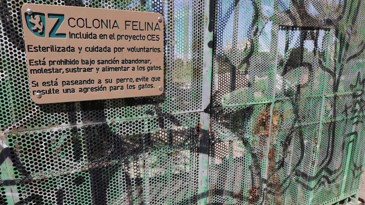 Colonia felina del Parque Pignatelli, en una foto de archivo.