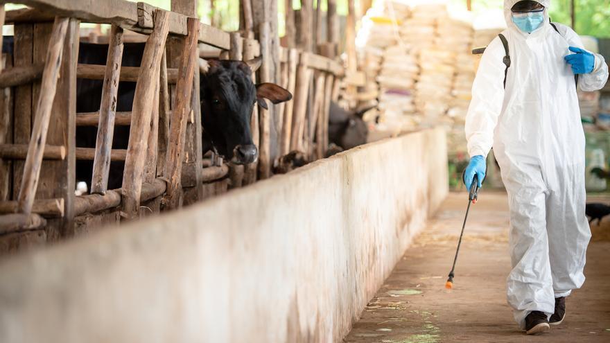 Enfermedades procedentes de animales: De la peste bubónica a la Covid-19