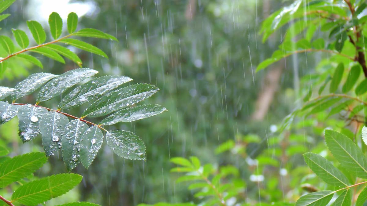 Lluvia en la selva tropical.