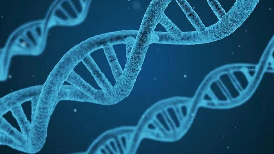 Un estudi posa de manifest la importància de considerar el sexe com una variant biològica en la genètica humana