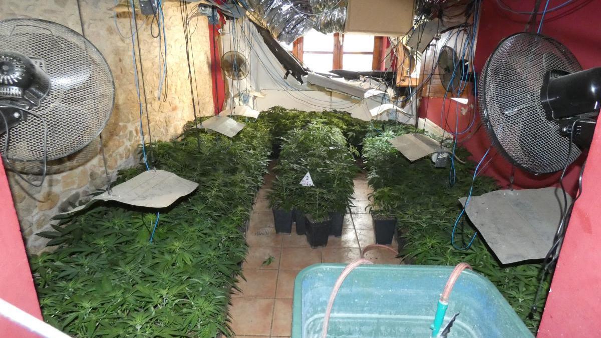 En una masia de la població d'Avinyonet de Puigventós hi havia una plantació de marihuana