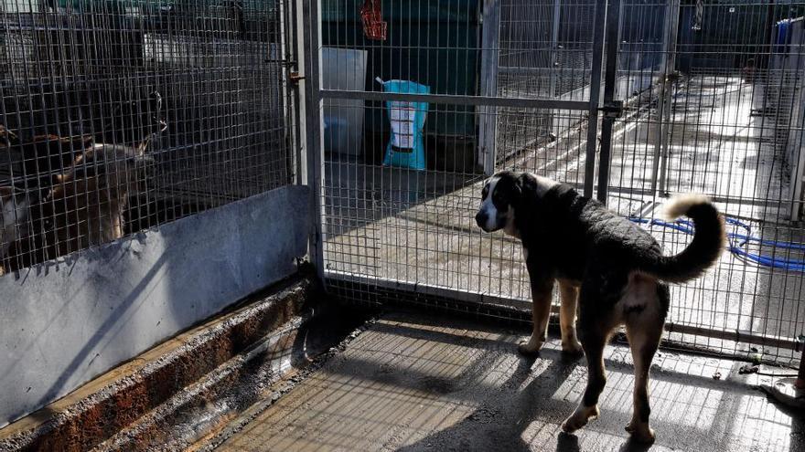 Los animalistas desconfían de las cifras del albergue de Serín
