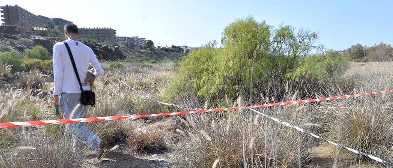 El Gobierno canario interviene en el yacimiento de la parcela de El Veril