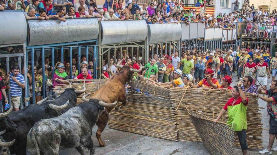 "Pedreguer organiza por primera vez ""bous al carrer"" en octubre"