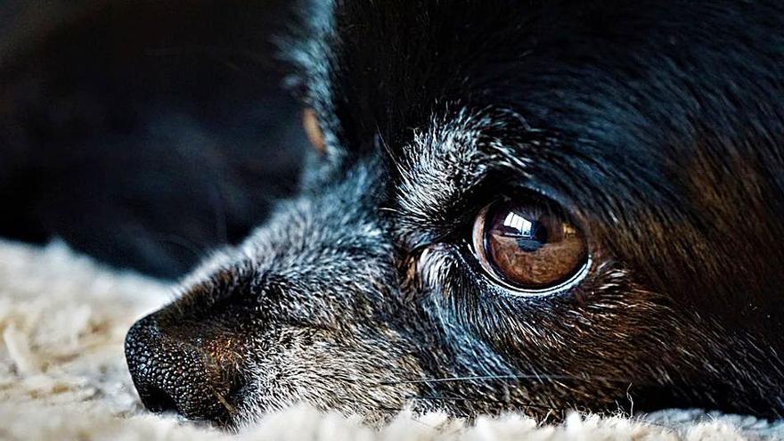 ¿Se puede evitar la muerte de un animal?