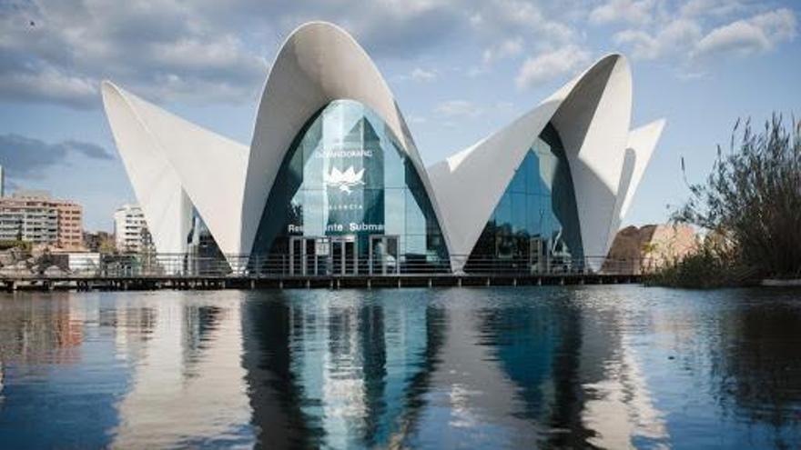 Global Omnium inyecta 9 millones al Oceanogràfic para cubrir la caída de ingresos y visitantes