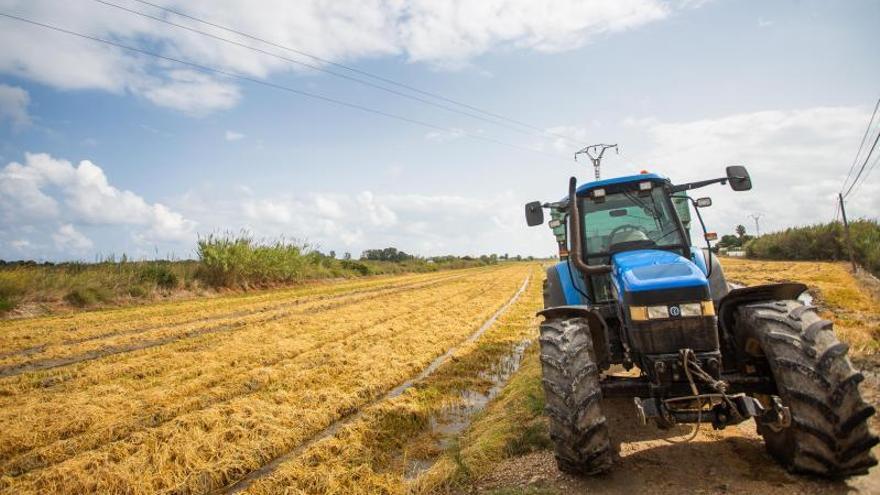 Los precios de la tierra suben un 2,5 % en la C. Valenciana mientras bajan en España