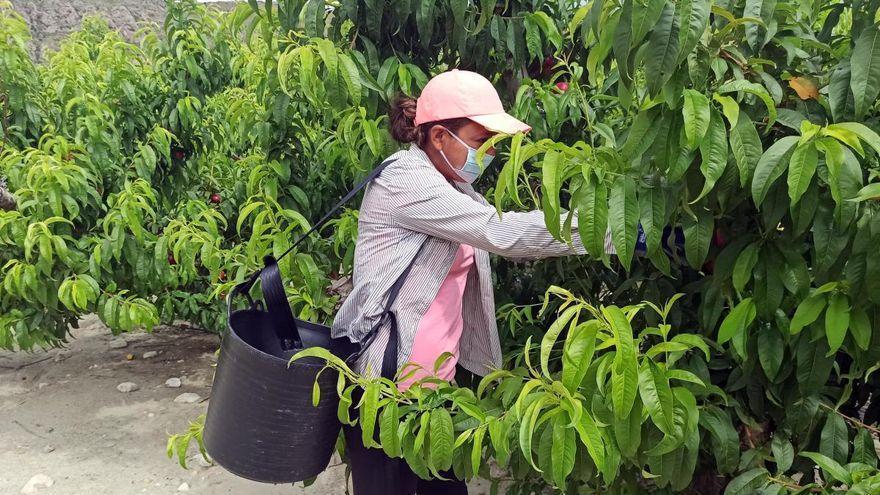 Las nuevas ayudas de la PAC ayudarán  a crecer a las cooperativas agrarias