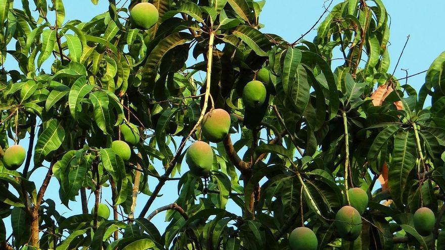 La fruta que te mantiene joven y consigue que adelgaces