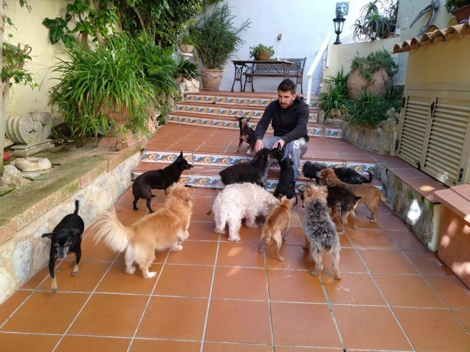 Hunde Katzen Mallorca Andratx