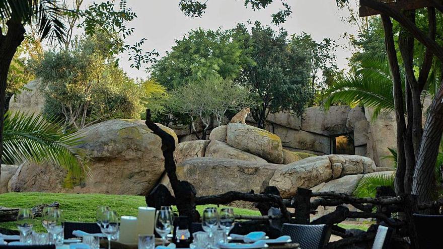 Sopar al costat de lleons i flamencs