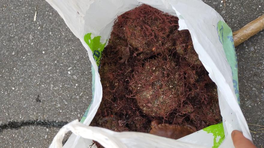 Sorprendido un furtivo en Vigo con 5 kilos de centolla