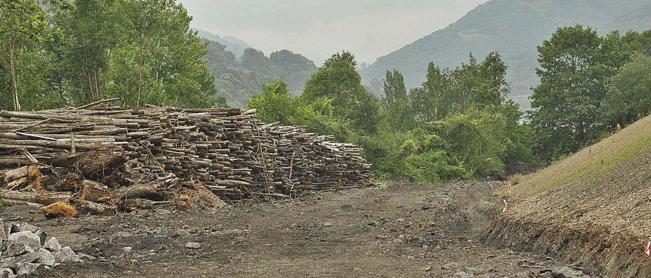 Hunosa busca coordinar al sector forestal para explotar la biomasa en Asturias