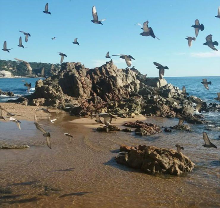 Ocells sobrevolant la platja de Lloret de Mar.
