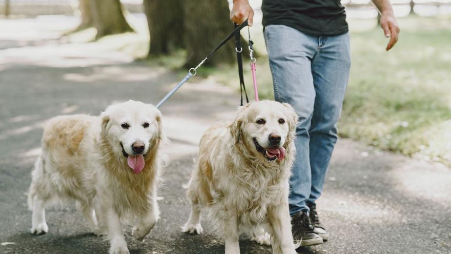 Las 10 cosas que los perros odian de ti y tú sigues haciendo