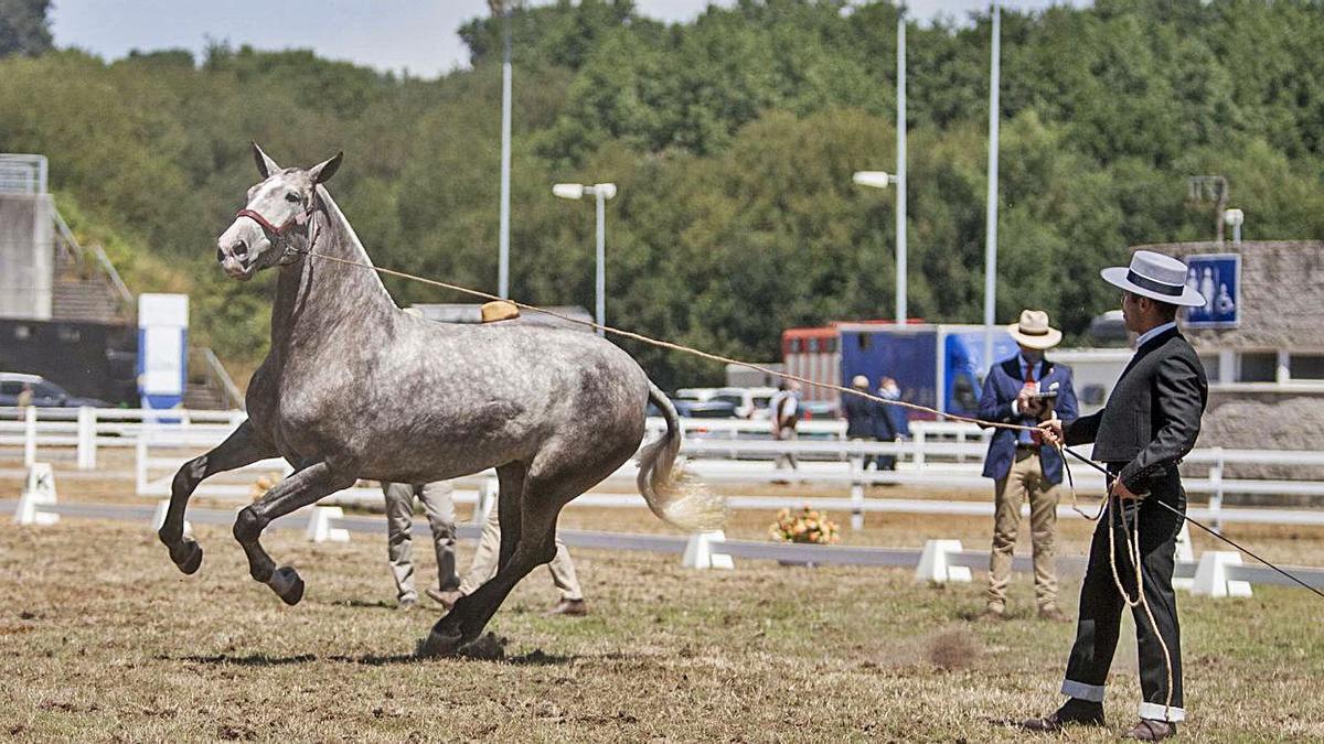 Campeonato de pura raza española en 2020.   | // BERNABÉ/ANA AGRA
