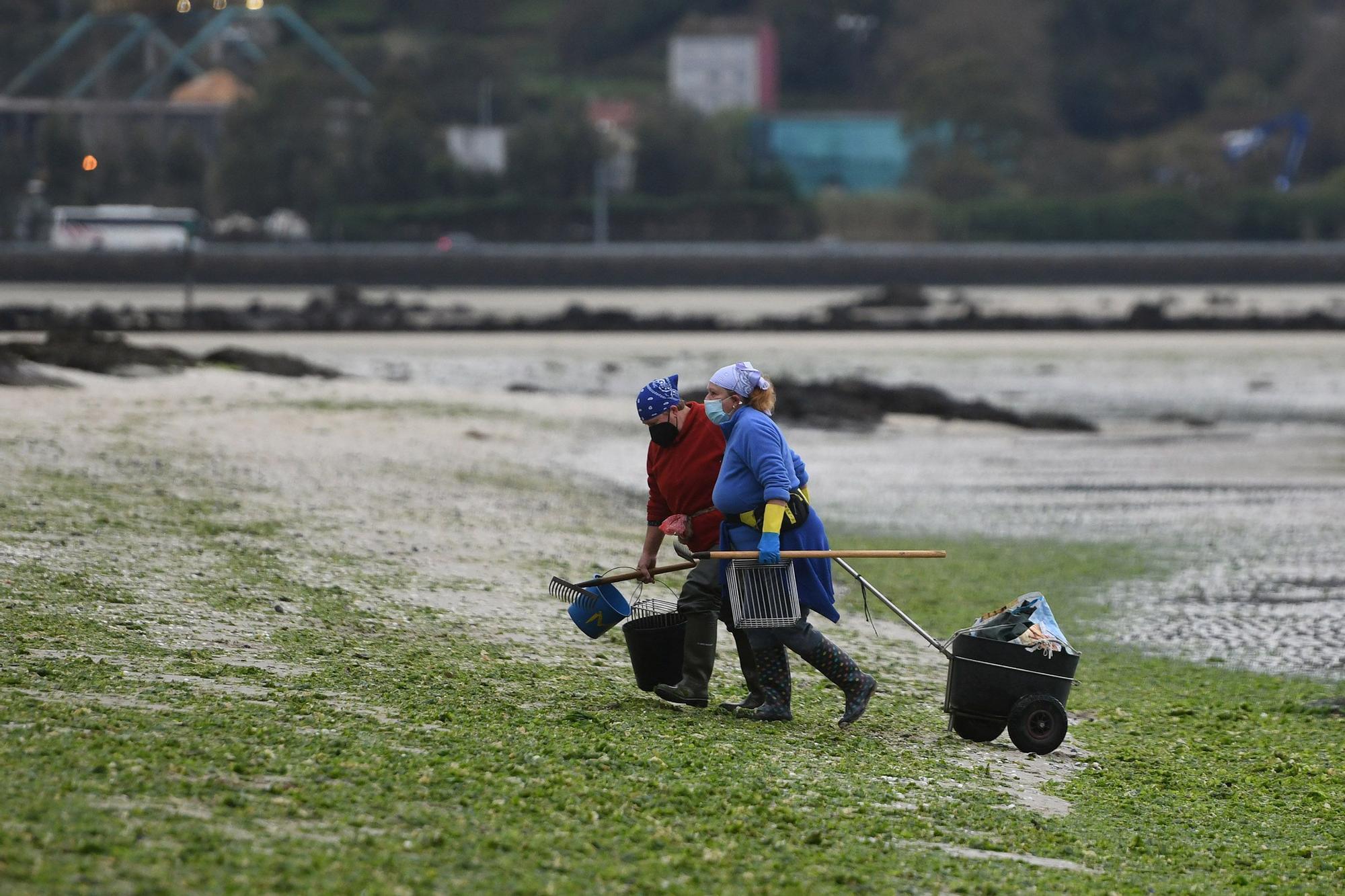 Las mariscadoras vuelven a faenar