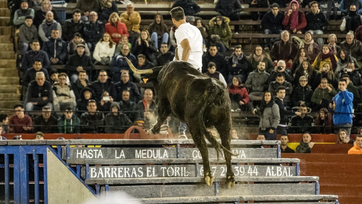 Las mejores vacas y toros del Levante mostrarán su trapío en la Liga del Corro, que se celebra hoy en Castelló.