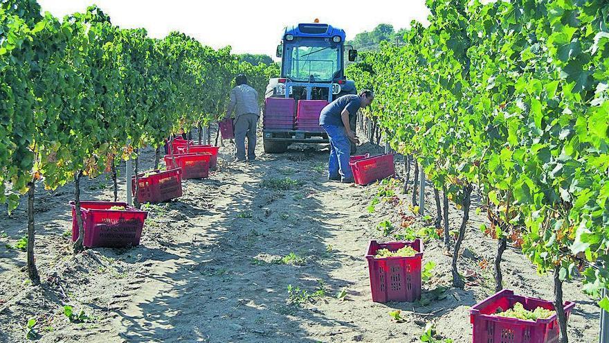 L'economia del vi