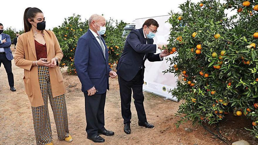 El sector citrícola y el Consell reclaman el apoyo de la UE a través de la nueva PAC